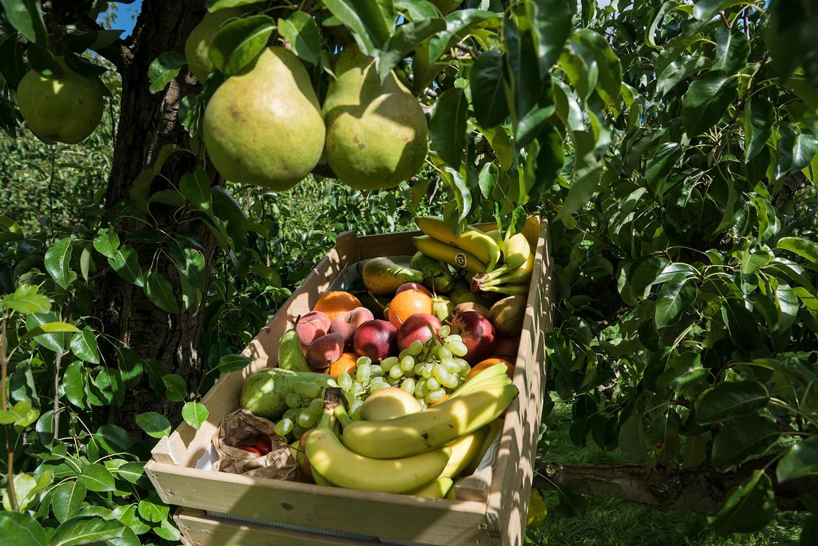 Seizoensfruit